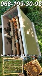 Пчёлы: пчелопакеты и плодные матки.